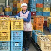 農業実習生がようやくベトナムに帰国出来ました!